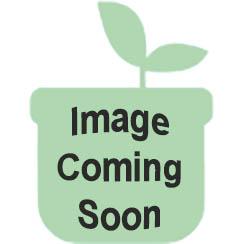 "Peerless Stove BHK5X0OP 20"" Sealed White Gas Range"